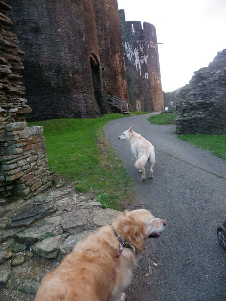 Caerphilly Castle inner path dog walking