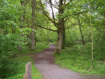 Dog walking in Swansea Valley, Wales - Craig y Nos Country Park Woodland