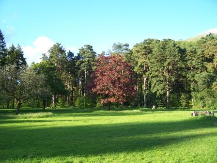 Dog Friendly B&B - Craig y Nos Country Park in Wales tall trees surround the picnic field