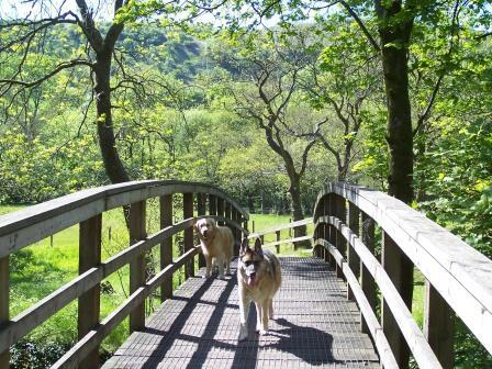 Dog Friendly accommodation Wales - Craig y Nos Country Park Bridge over River Tawe