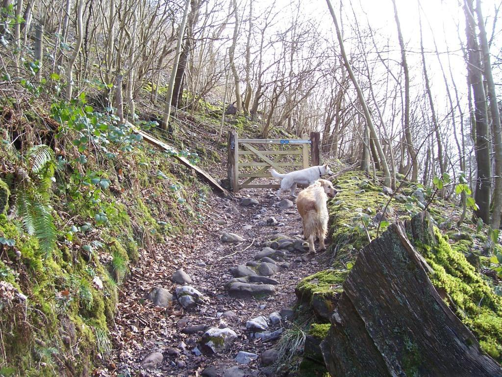 Dog Friendly Accommodation Brecon Mountain Walk bridal path tracks behind Craig y Nos Country Park
