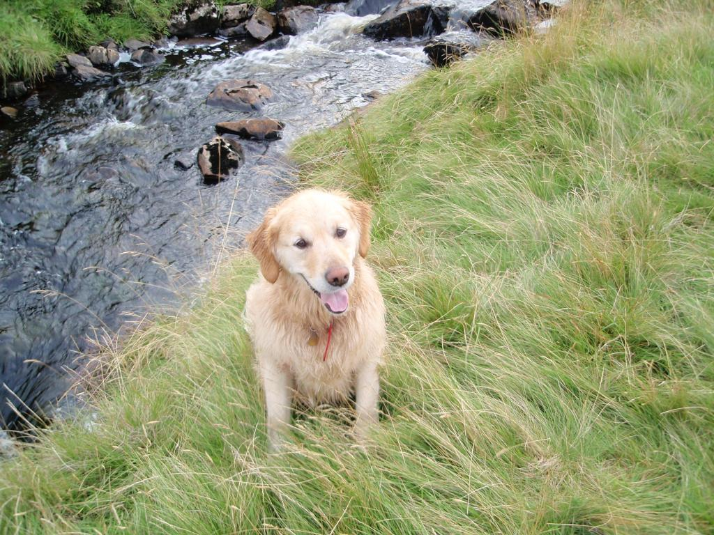 Dog Friendly Accommodation Brecon Mountain Walk jack the dog by stream
