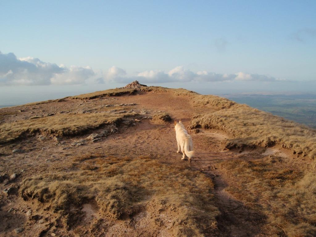 Dog Friendly Accommodation Brecon Mountain Lady of the Lake Dog Walk