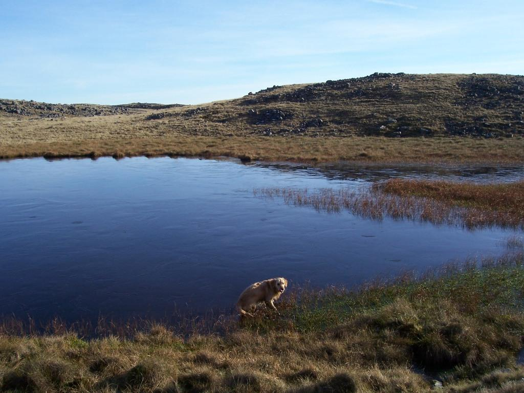 Dog Friendly Accommodation Brecon Mountain Walk Jack takes a swim in icy lake