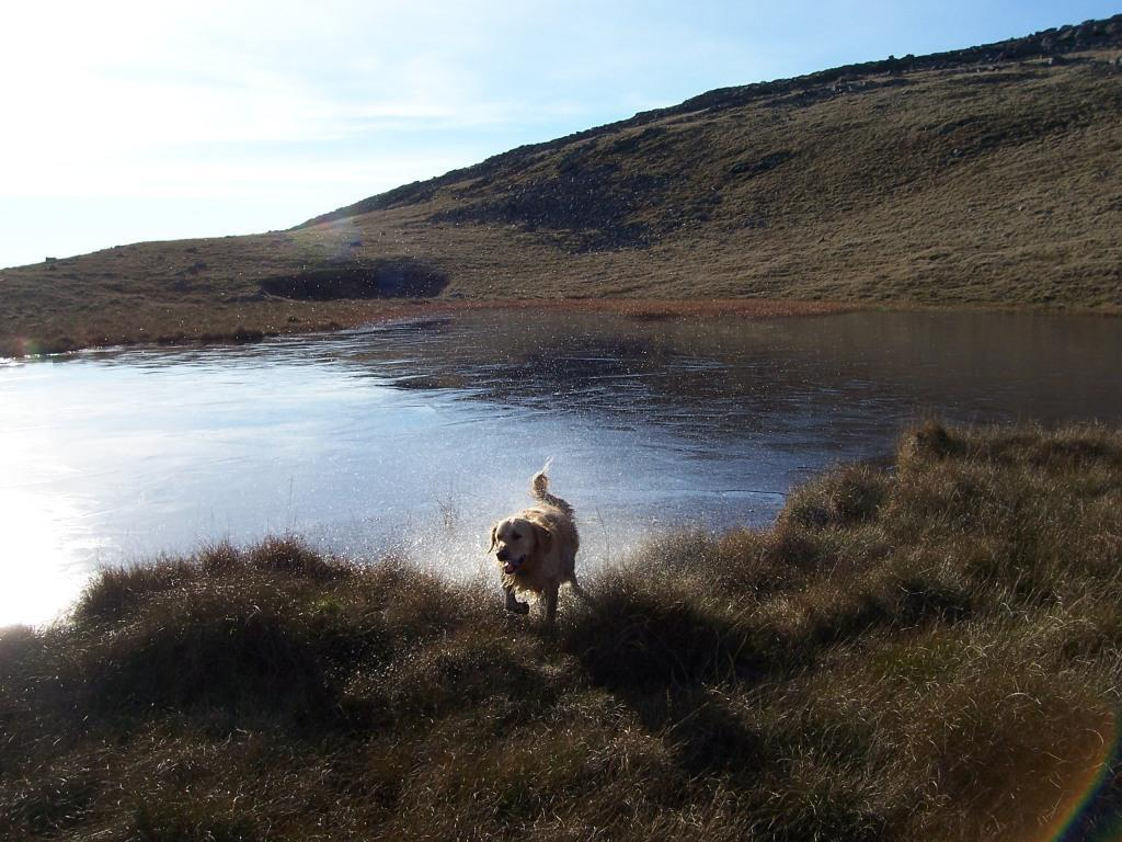 Dog Friendly Accommodation Brecon Mountain Walk Jack the dog shakes water off after swimming in frozen lake