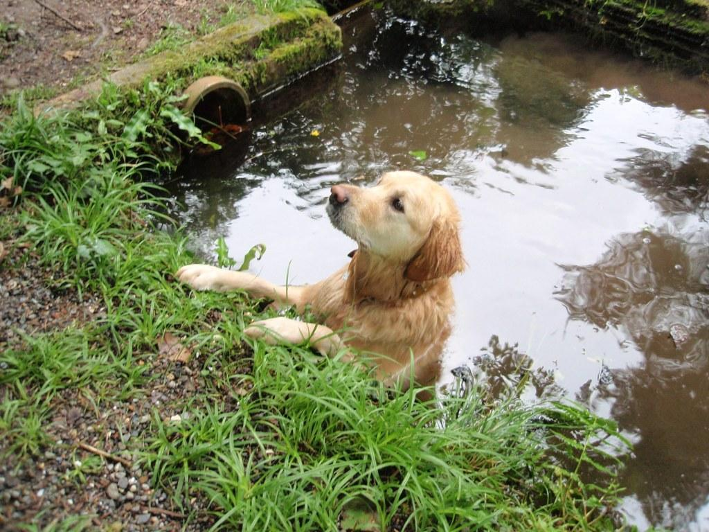 Dog Friendly Bed and Breakfast Hotel Jack the dog in trench swimming pool