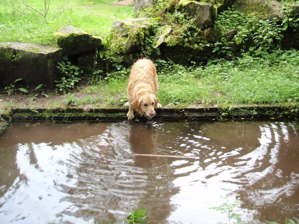 Dog Friendly Bed and Breakfast Hotel Jack the dog inspects swimming trench pool