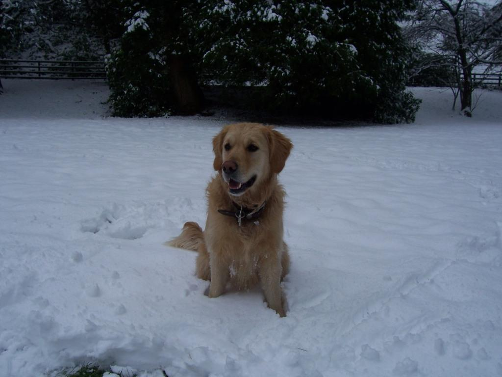 Dog Friendly Hotel in Brecon Craig y Nos Castle Jack the dog in snow in Lower Garden
