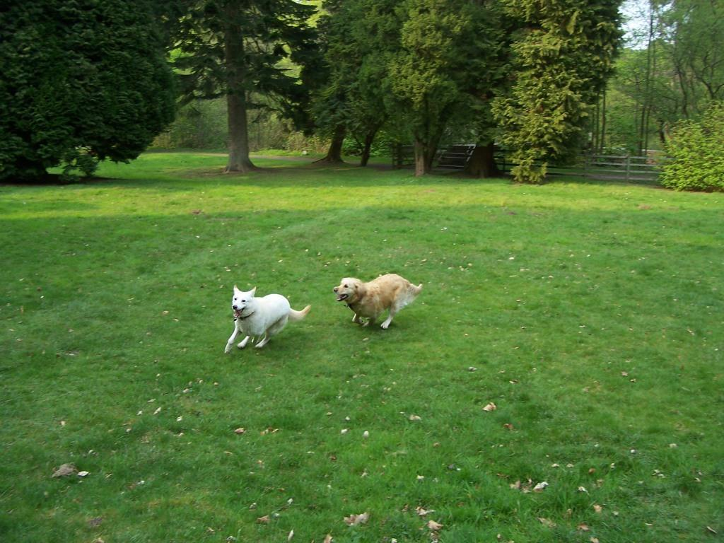 Dog Friendly Hotel in Brecon Craig y Nos Castle Jack and Sheeba dogs running off lead in Lower Garden