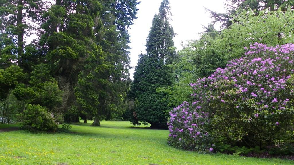 Dog Friendly Hotel in Brecon Craig y Nos Castle Lower Garden with rhododendons