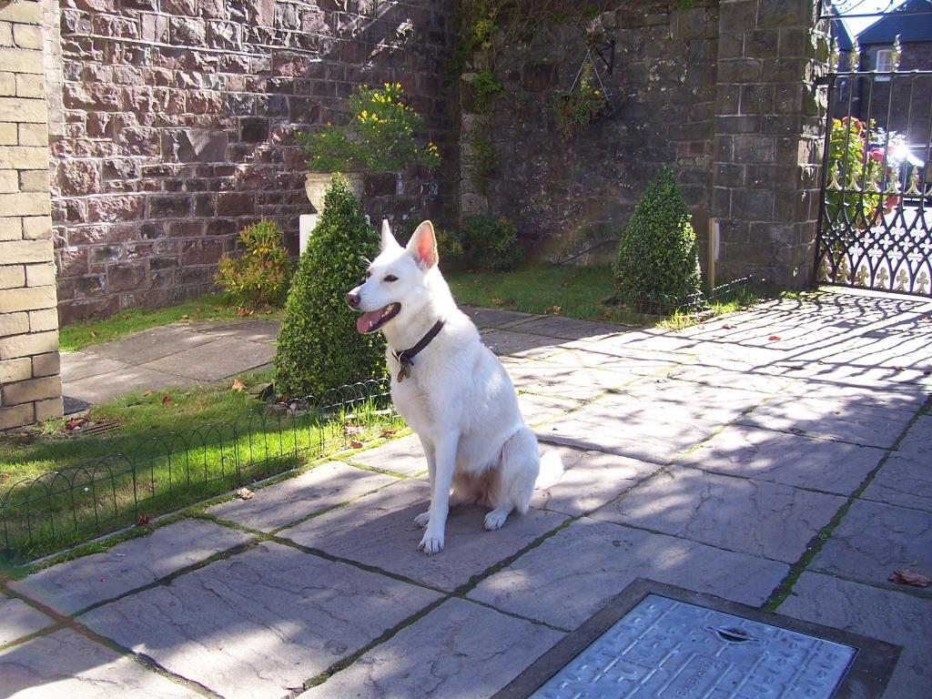 Dog Friendly Hotel Brecon Craig y Nos Castlte Theatre Garden Sheeba the dog sitting