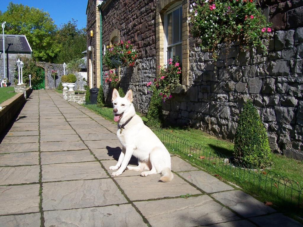 Dog Friendly Hotel Brecon Theatre Garden at  Craig y Nos Castle with Sheeba the dog sitting