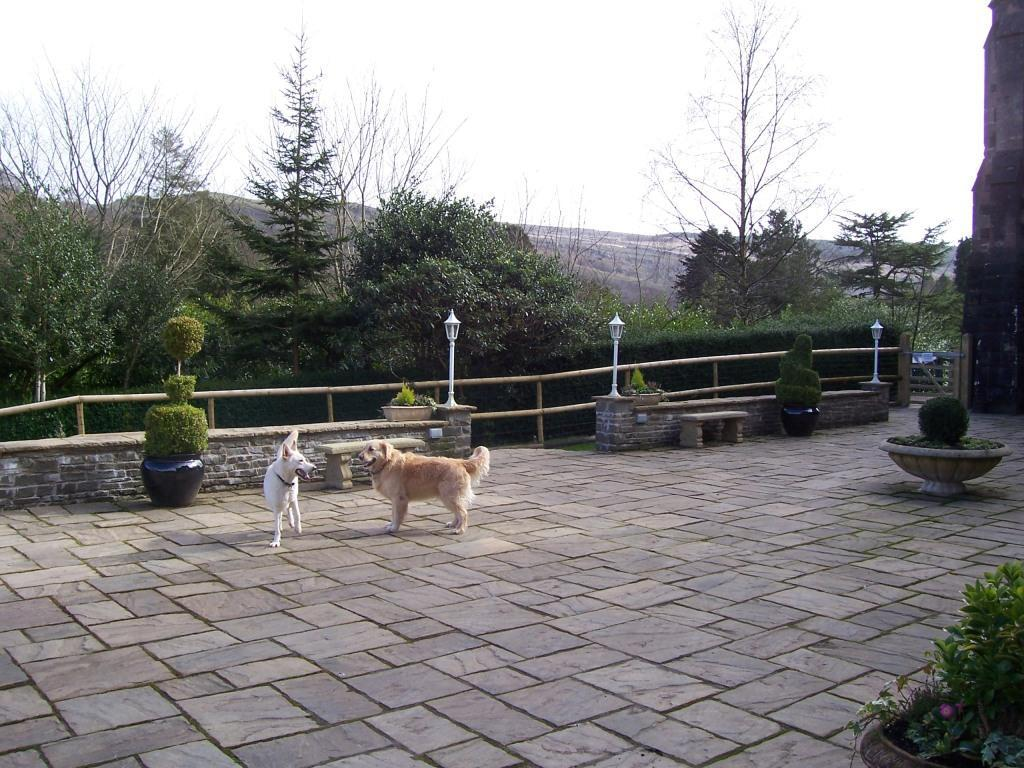 Dog Friendly Hotel Brecon Theatre Terrace Sheeba and Jack the dog on terrace