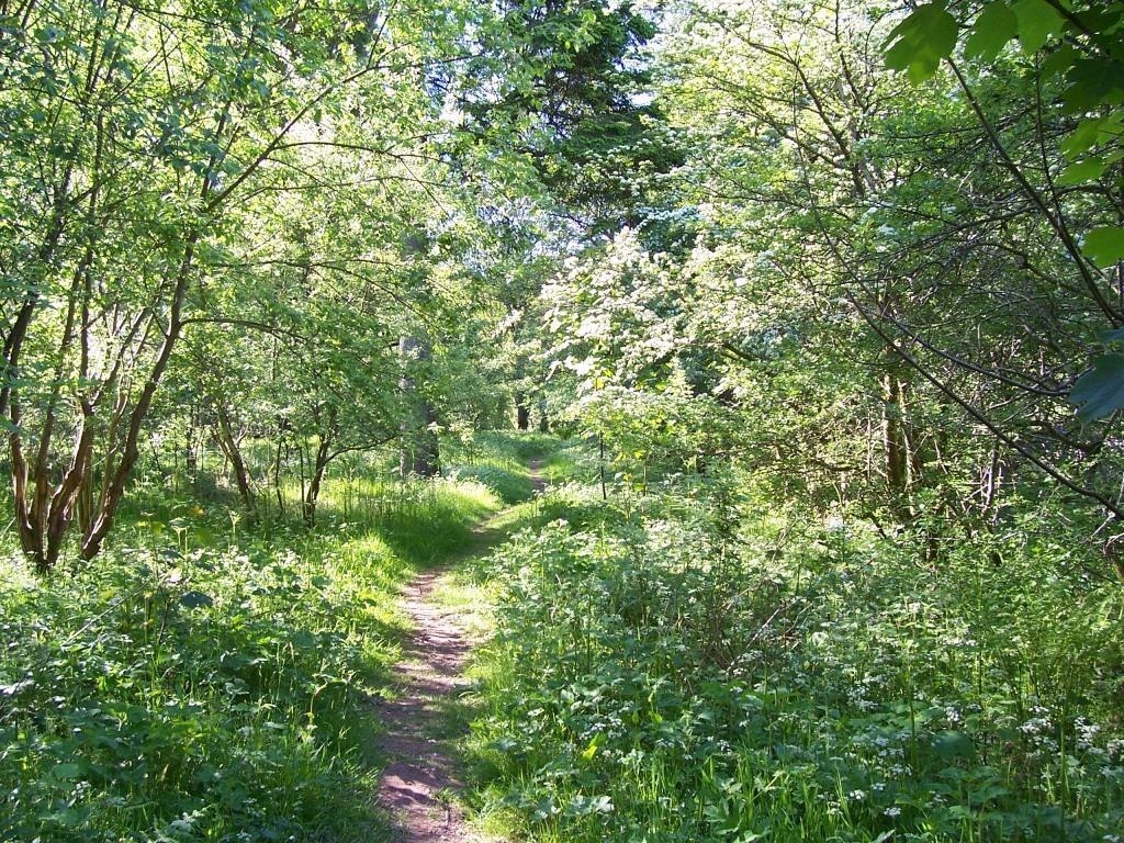 Dog Friendly Holidays Brecon Wales Craig y Nos Country Park woodland path by meadow