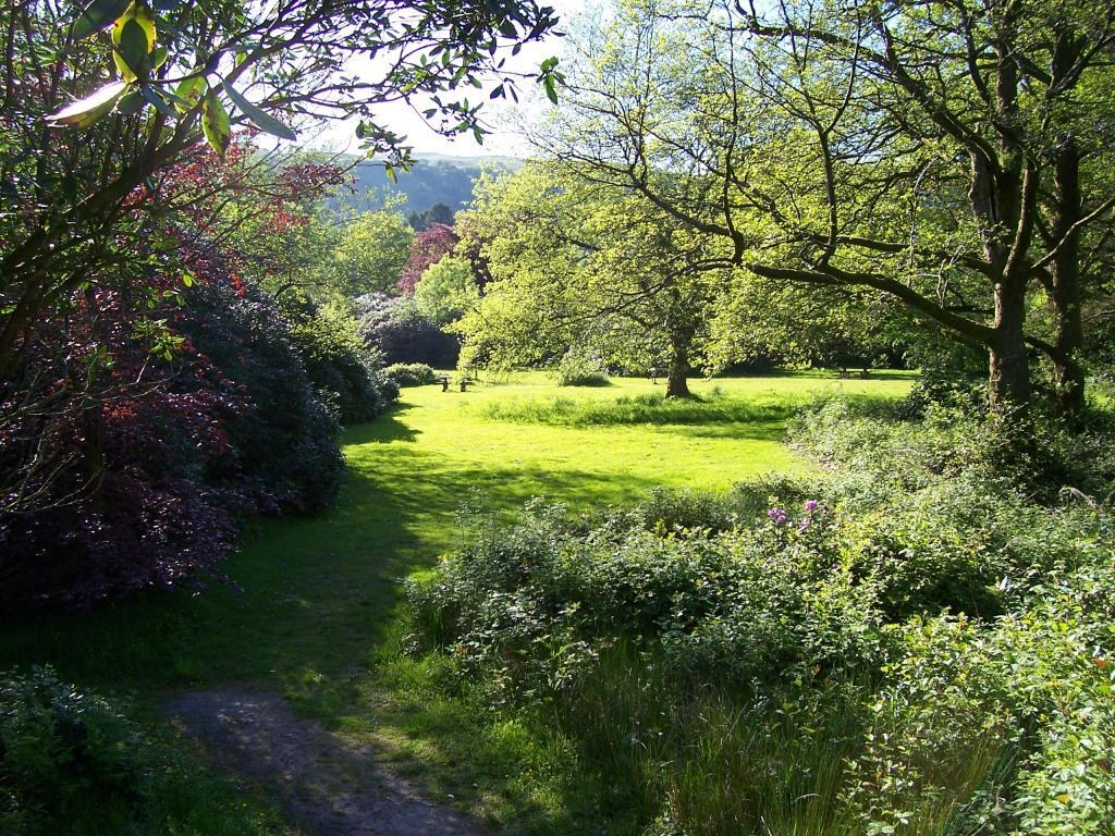 Dog Friendly Holidays Brecon Wales Craig y Nos Country Park rhododendons and green trees