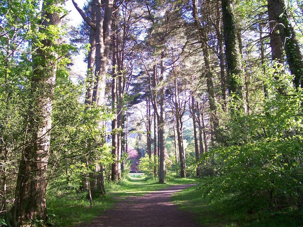 Dog Friendly Holidays Brecon Wales Craig y Nos Country Park tall trees path