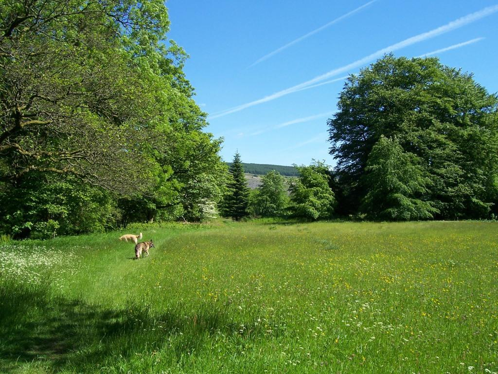 Dog Friendly Holidays Brecon Wales Craig y Nos Country Park hay meadow dogs walking