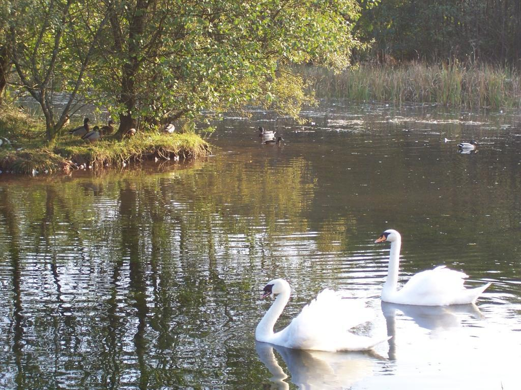 Dog Friendly Holidays in Swansea Valley Wales Craig y Nos Country Park two swans on lake