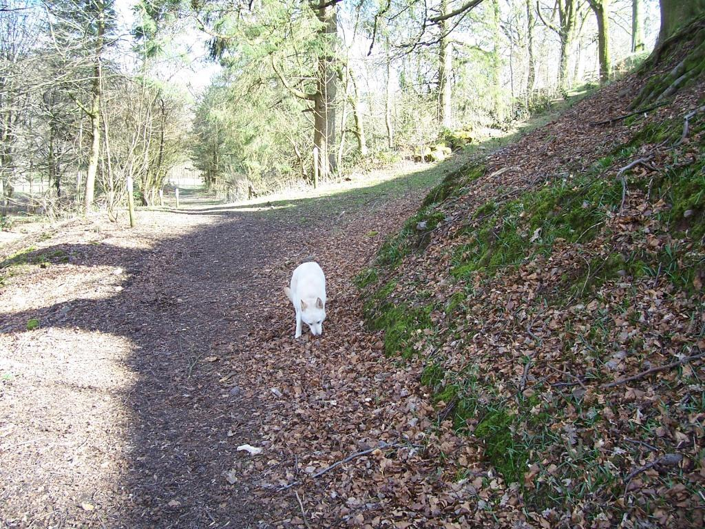 Dog Friendly Holidays  in Swansea Valley Wales Craig y Nos Country Park dog walking forest path