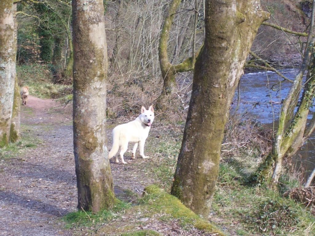 Dog Friendly Holidays  in Swansea Valley Wales Craig y Nos Country Park sheeba the dog on woodland path by river Tawe