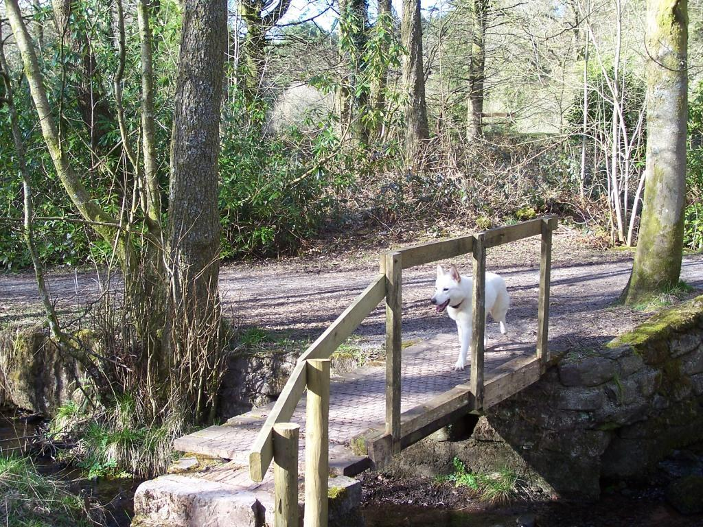 Dog Friendly B&B Brecon Wales Craig y Nos Country Park footbridge