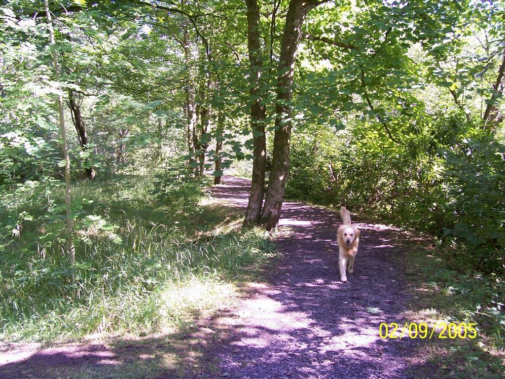 Dog Friendly Holidays Brecon Wales Jack the dog on woodland path in Craig y Nos Country Park