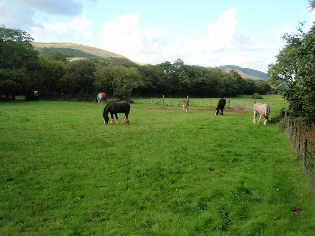 Dog Friendly Holidays Brecon Wales shire horses in Craig y Nos Country Park