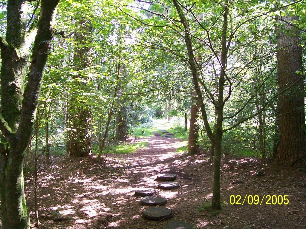 Dog Friendly Holidays Brecon Wales stepping stones woodland path in Craig y Nos Country Park