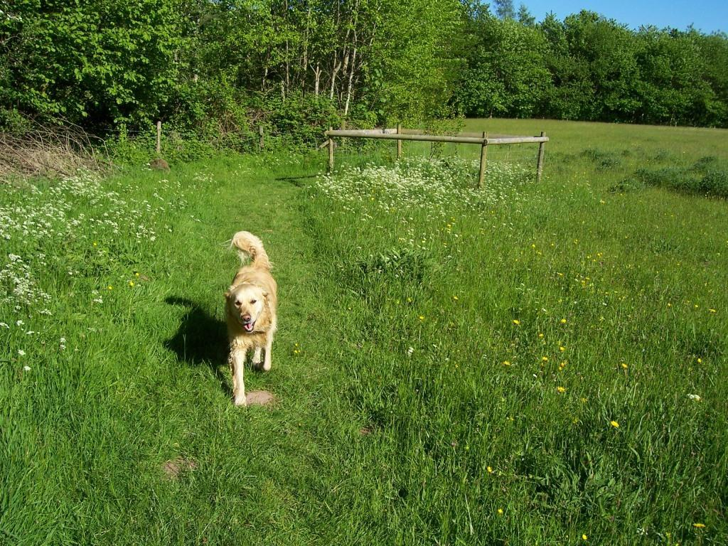 Dog Friendly Holidays Brecon Wales Jack the dog walking in meadow in Craig y Nos Country Park