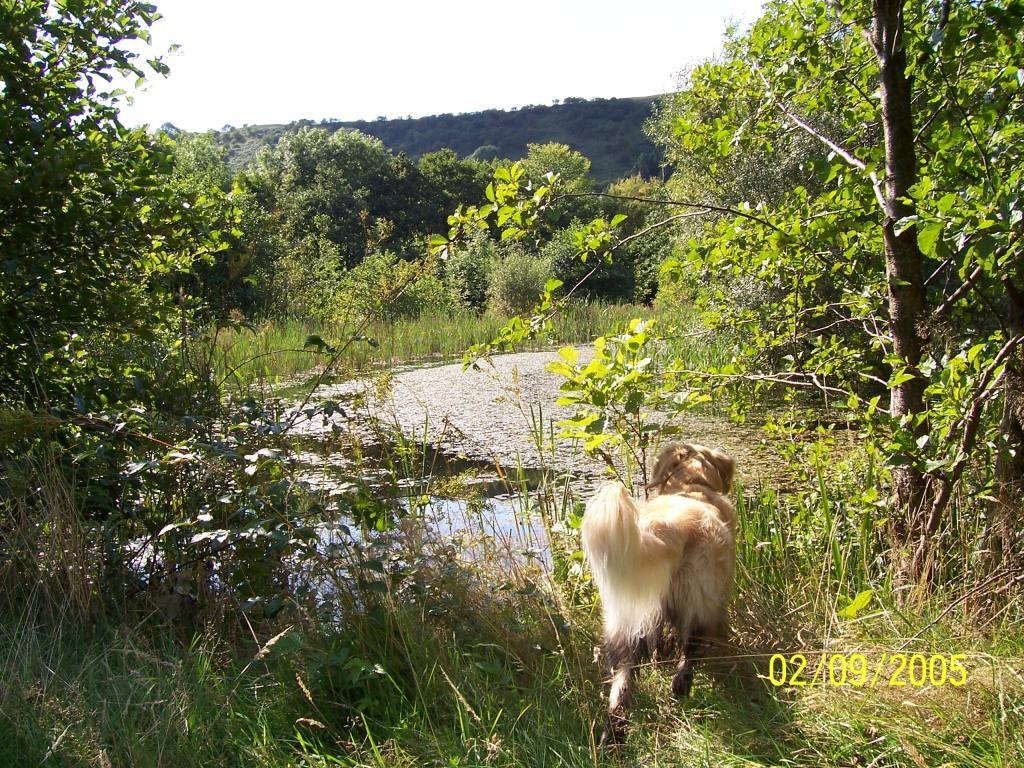 Dog Friendly Guest house accommodation near Brecon Wales jack the dog looks at lake in Craig y Nos Country Park