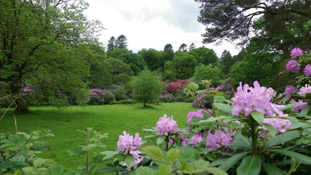 Dog Friendly Holidays Brecon Wales Craig y Nos Country Park Rhododendrons in bloom