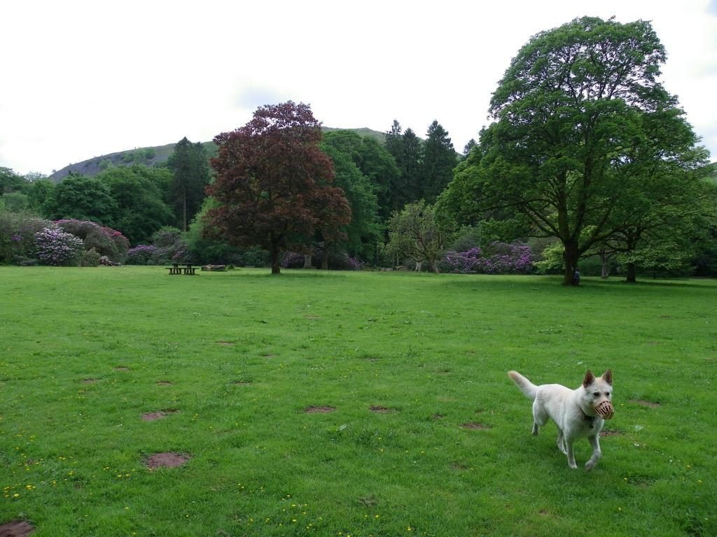 Dog Friendly Holidays Brecon Wales running dog Craig y Nos Country Park