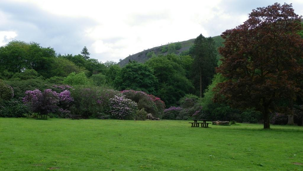 Dog Friendly Holidays in Wales picnic meadow Craig y Nos Country Park