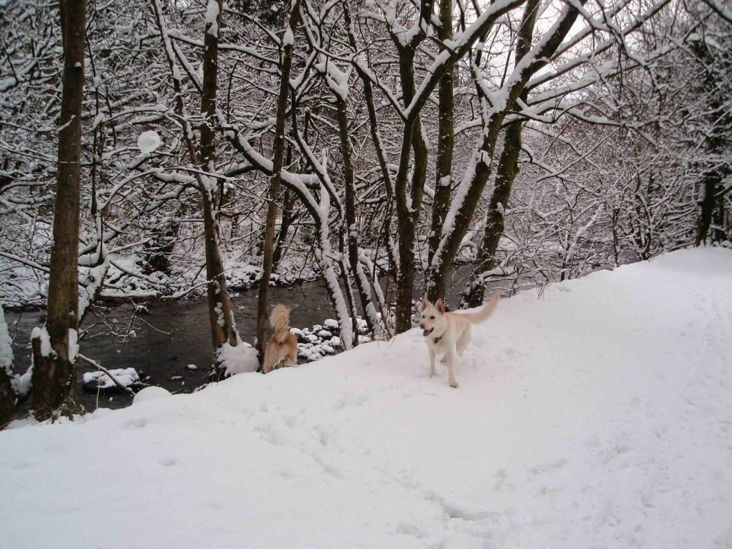 Dog Friendly Hotel Swansea Wales Craig y Nos Country Park dogs by River Tawe in Winter Snow