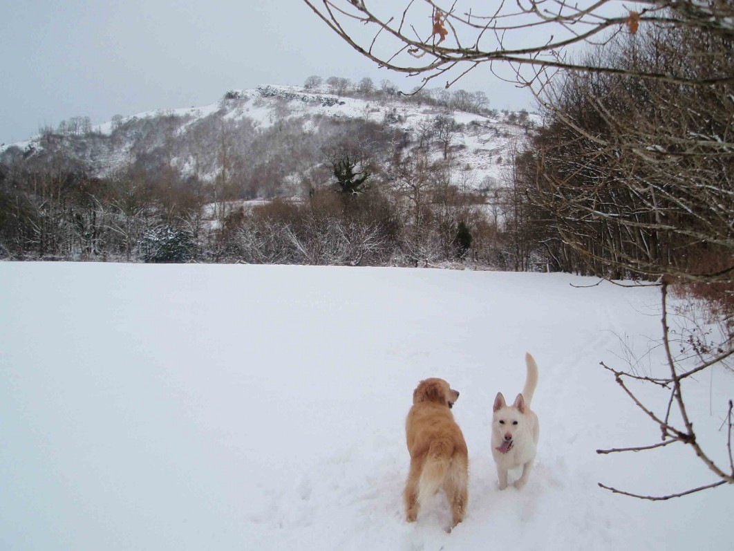 Dog Friendly Hotel Swansea Wales Craig y Nos Country Park dogs playing in Winter Snow
