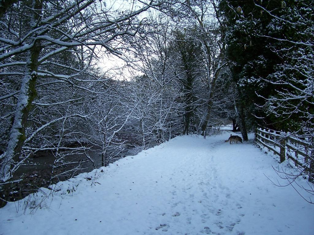 Dog Friendly Hotel Swansea Wales Craig y Nos Country Park path by river Tawe in Winter Snow