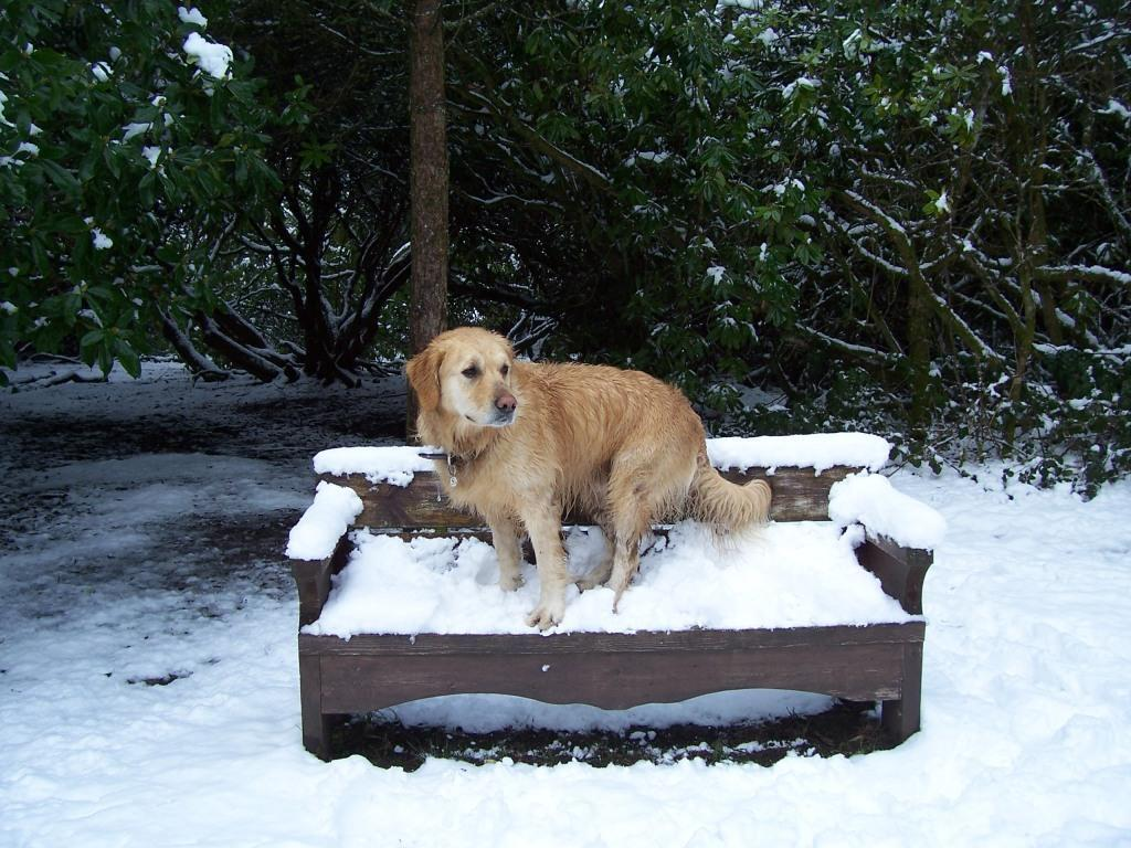 Dog Friendly Hotel Swansea Wales Craig y Nos Jack the dog sits on snow covered bench in Country Park in Winter Snow