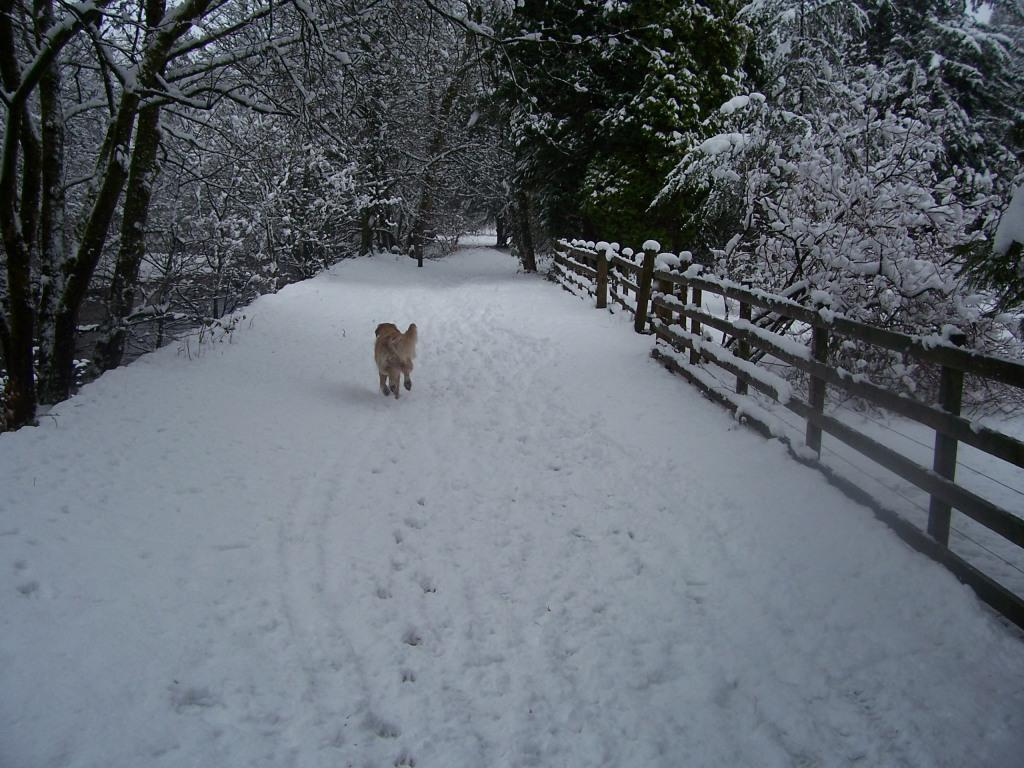 Dog Friendly Hotel Swansea Wales Craig y Nos Country Park Jack the dog running away from camera in Winter Snow