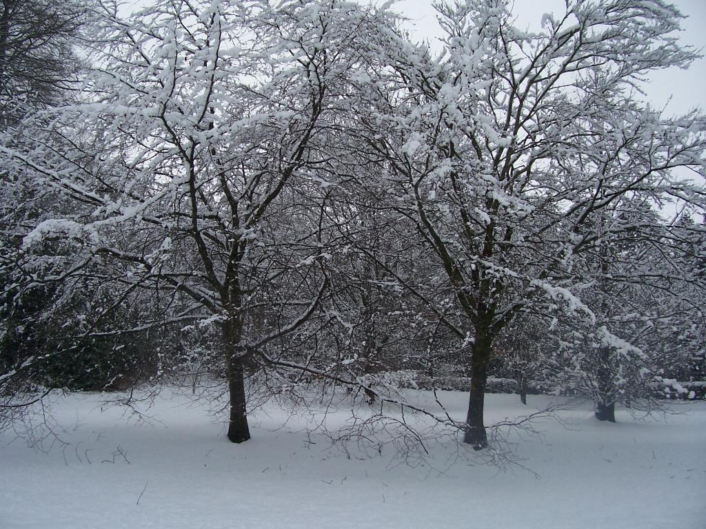 Dog Friendly Hotel Swansea Wales Craig y Nos trees Country Park in Winter Snow