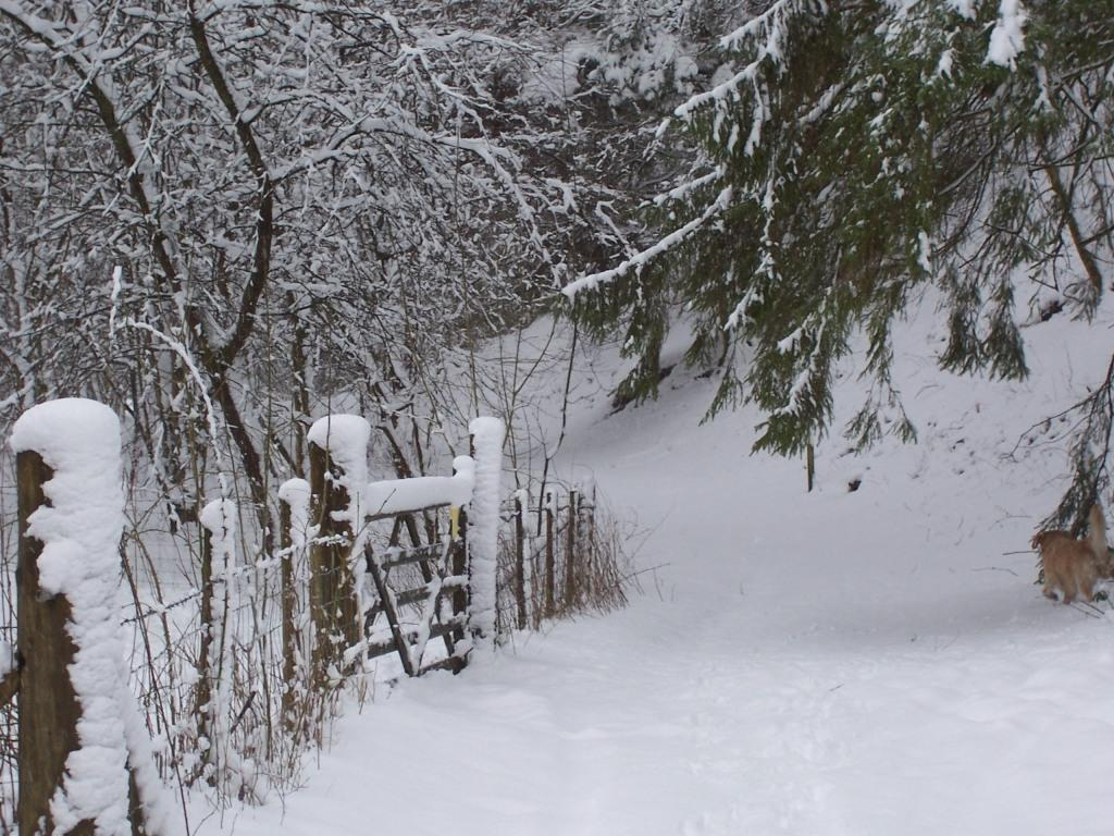 Dog Friendly Hotel Swansea Wales Craig y Nos Country Park path and fieldgate covered in Winter Snow
