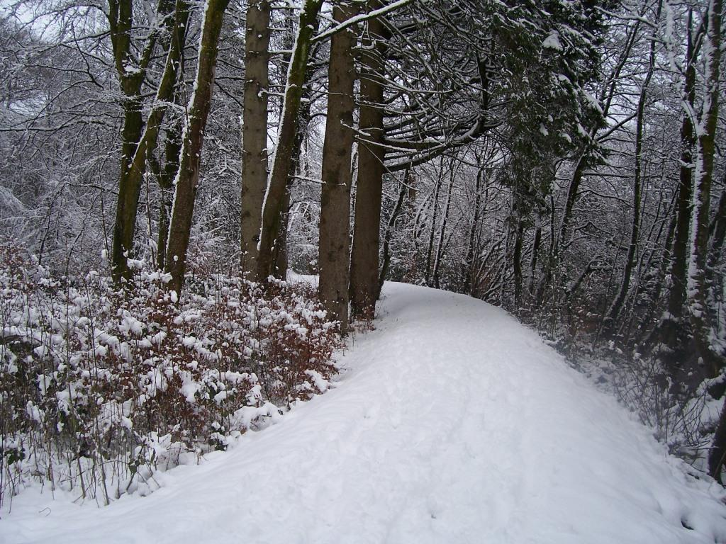 Dog Friendly Hotel Swansea Wales Craig y Nos woodland path in Country Park in Winter Snow