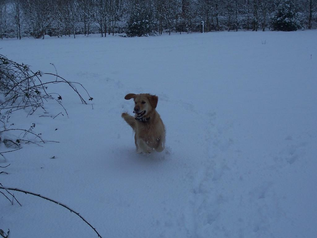 Dog Friendly Hotel Swansea Wales Craig y Nos Country Park dog running in Winter Snow