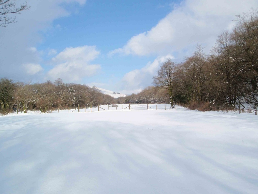 Dog Friendly Hotel Swansea Wales horse field at Craig y Nos Country Park in Winter Snow