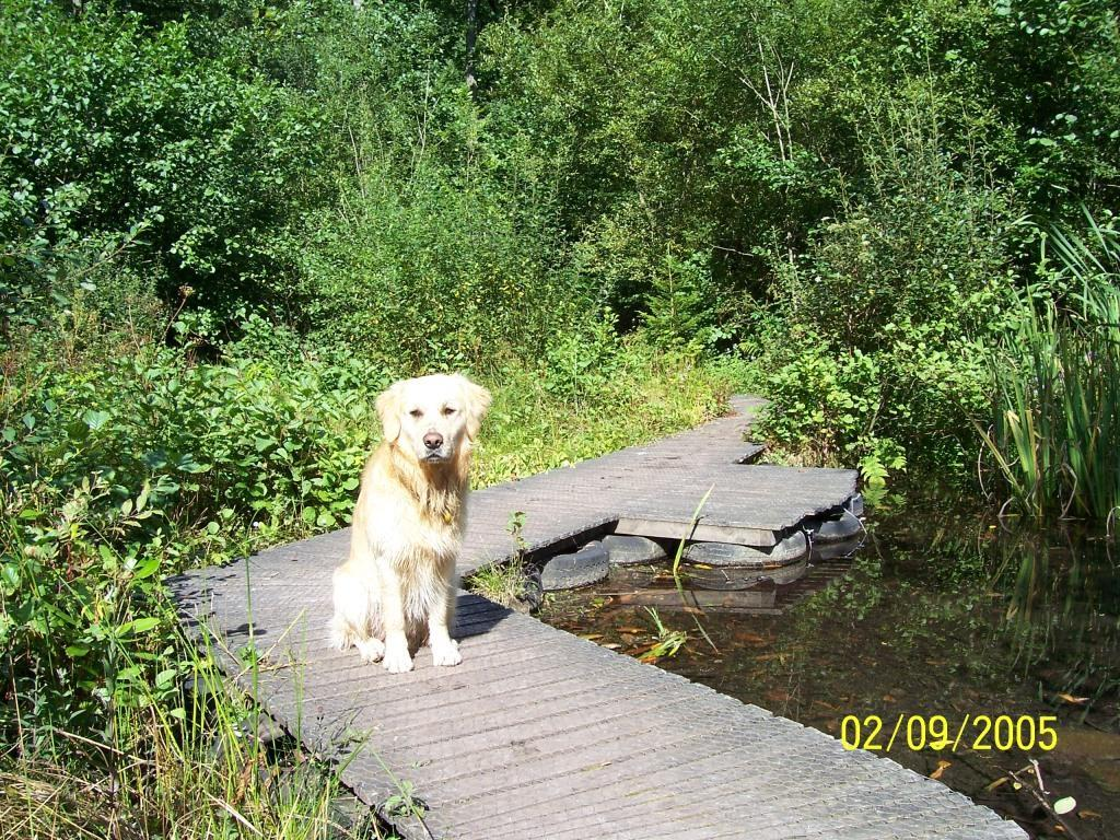 Dog Friendly Hotel Swansea Wales Jack the dog sits on boardwalk at Craig y Nos Country Park in September