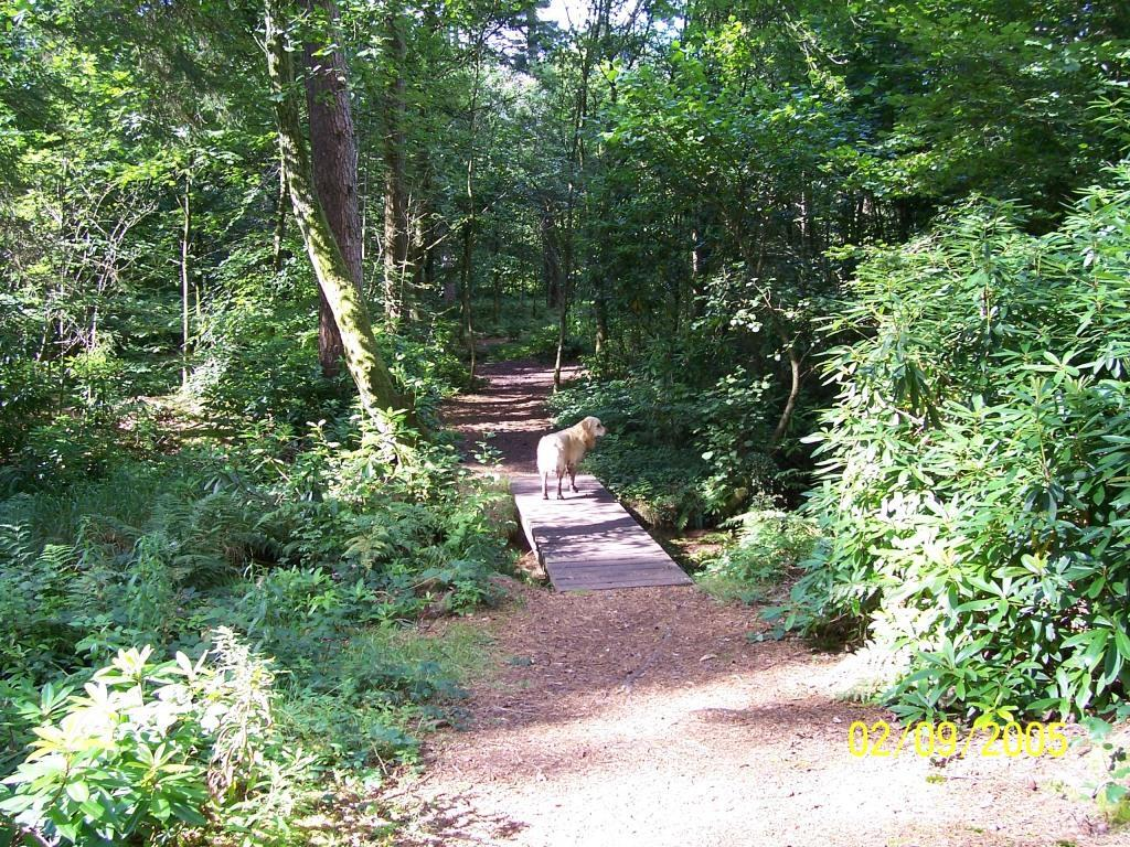 Dog Friendly Hotel Swansea Wales dog walks on woodland path Craig y Nos Country Park in September