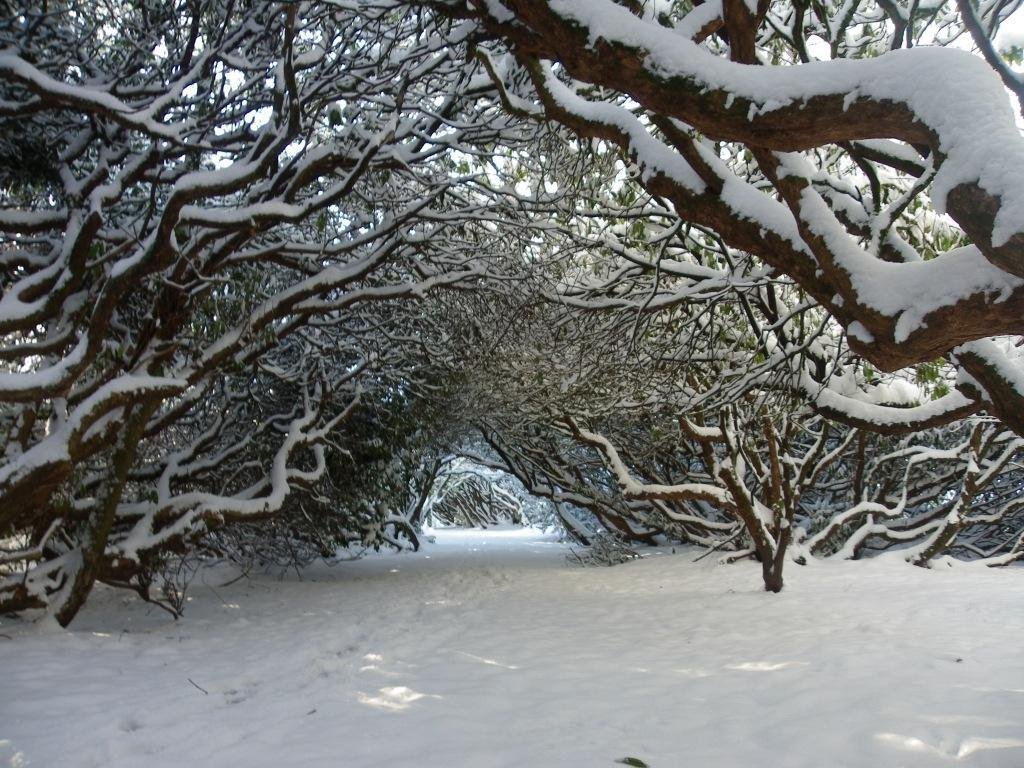Dog Friendly Hotel Swansea Wales Craig y Nos Country Park arch of trees path in Winter Snow