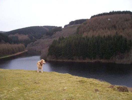 Dog friendly accommodation Wales - Llyn Brianne Reservoir dog walk, Jack the dog admires the view