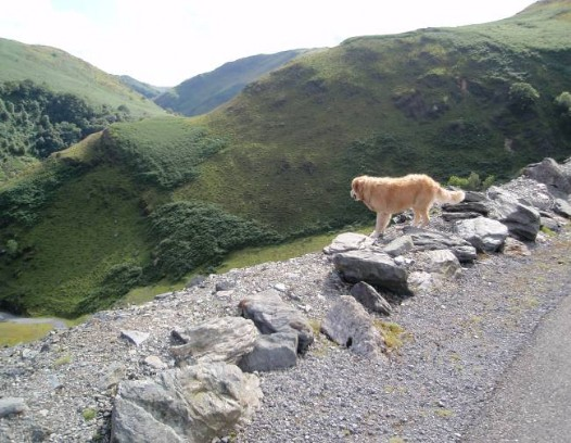 Dog friendly accommodation Wales - Llyn Brianne Reservoir dog walk stunning views from the path over the dam