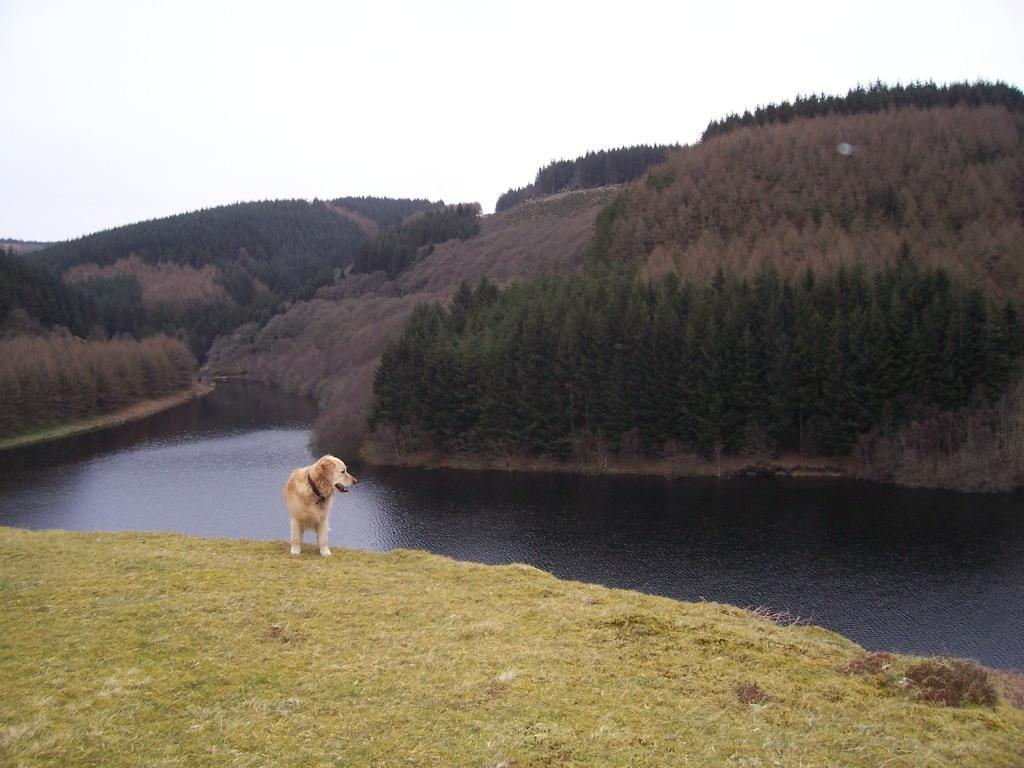 Llyn Brianne Reservoir Jack the dog admires view