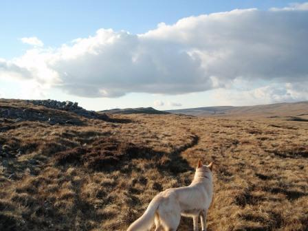 Dog Friendly holiday in Brecon Beacons Mountains - Craig y Nos Mountain Walk